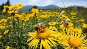 Why are Bees Dying? Climate Change and the Pollination Problem